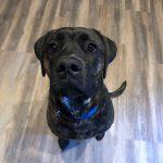 Rollo, Peek'n Puppy graduate