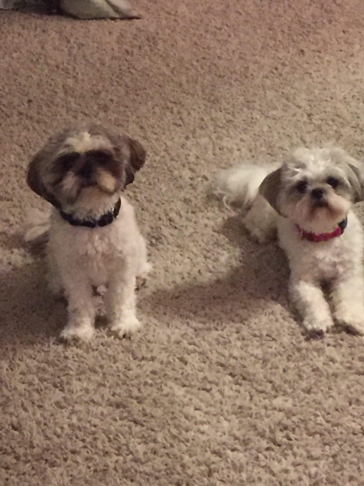 Bandit and Coco, Peek'n Puppy Graduates