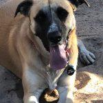 Bodhi, Peek'n Puppy graduate