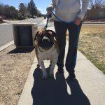 Cesar, Peek'n Puppy graduate