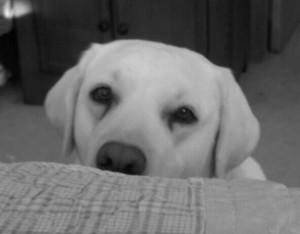 Daisy a Peek'n Puppy