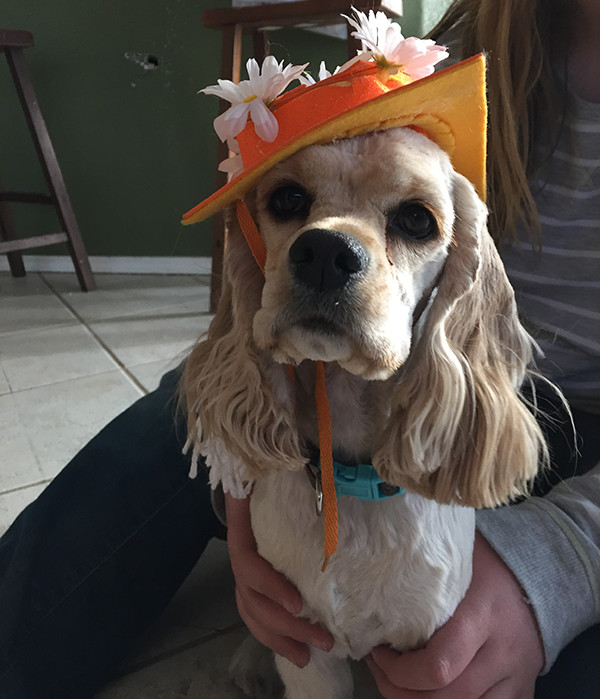Daisy in her graduation hat