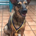 Mimi, AKC S.T.A.R. Puppy