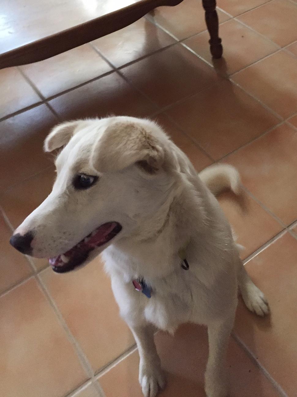 Lucy, a Peek'n Puppy Graduate