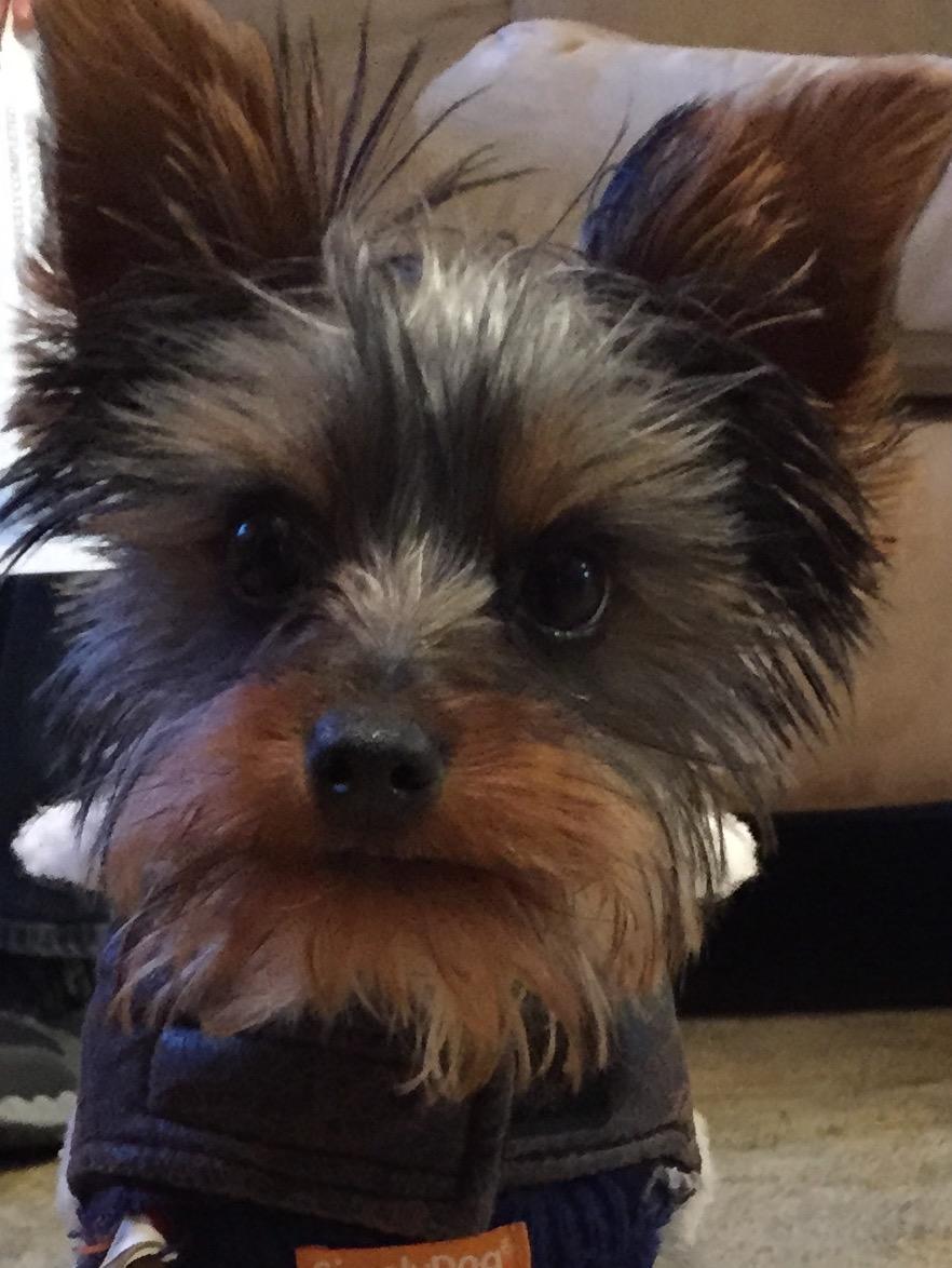 Scruffy, a Peek'n Puppy Graduate