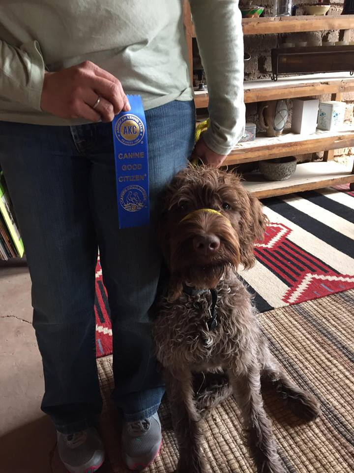 """Hanke, CGC """"Scott helped us train our first dog and we just completed our training for our 2nd puppy with full success. Thank you Scott from me and my fur babies."""" -Caro R., Albuquerque, NM"""