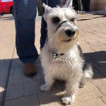 Paxton, Peek'n Puppy graduate