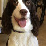 Sophie, Peek'n Puppy Graduate