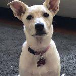 Capri, Peek'n Puppy Graduate