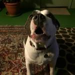 Maggie, a Peek'n Puppy graduate