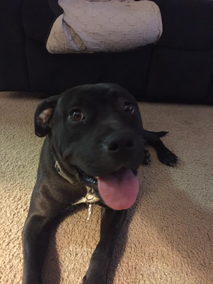 Luna, Peek'n Puppy graduate