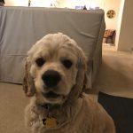 Maisie, Peek'n Puppy graduate