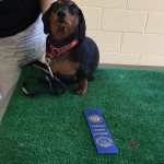 Marnie, a Canine Good Citizen graduate