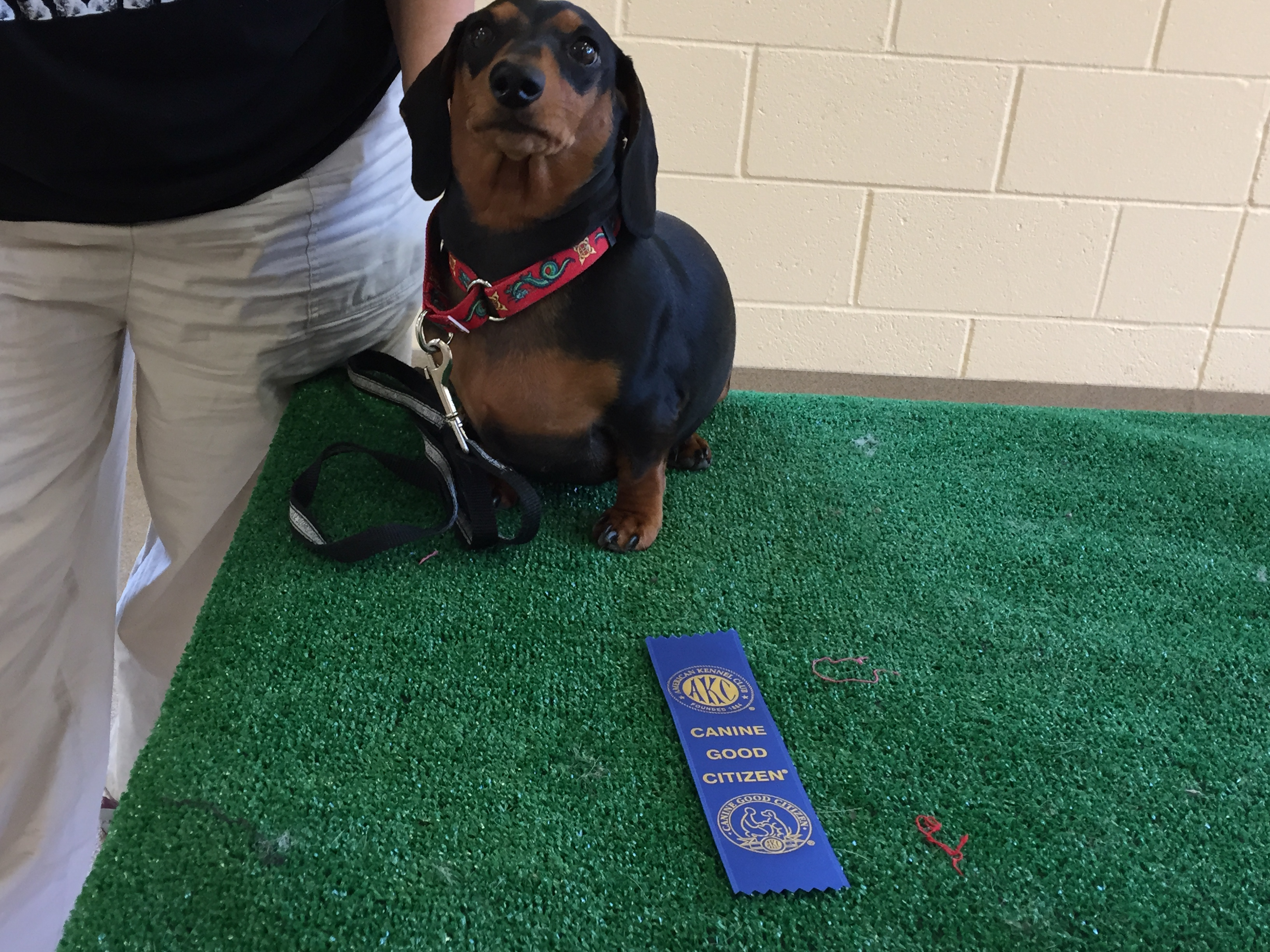 Marnie, a Canine Good Citizen graduate