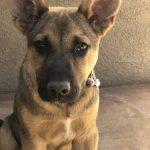 Max, Peek'n Puppy graduate