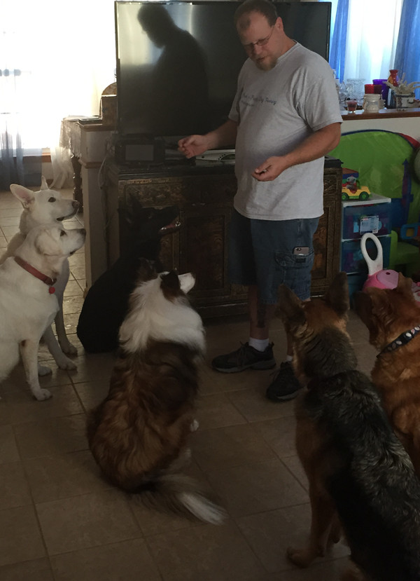 Scott working with six dogs