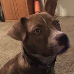 Tombo, Peek'n Puppy graduate