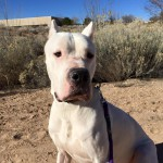 Zeus, a Peek'n Puppy Graduate