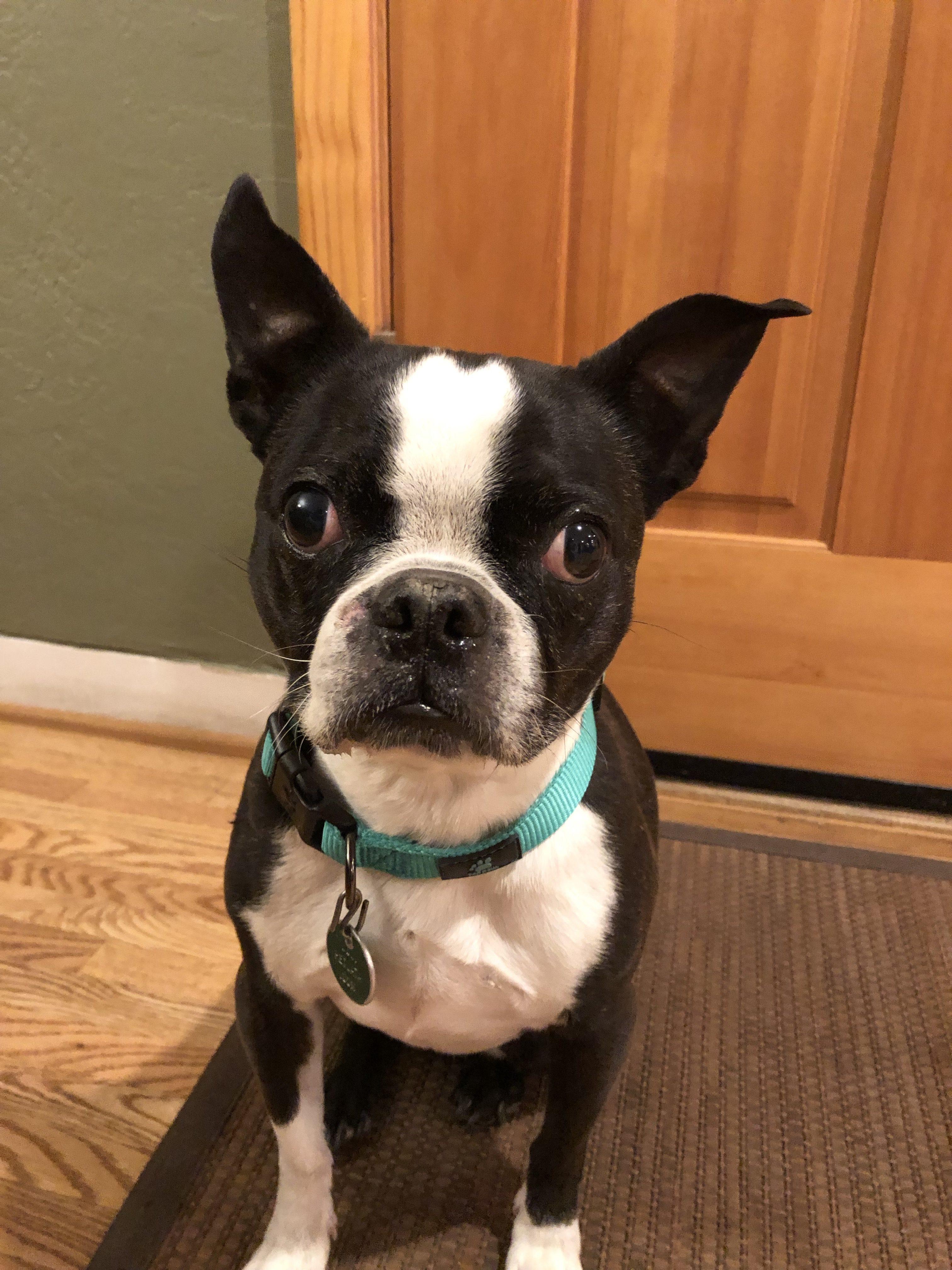 Lily, Peek'n Puppy graduate