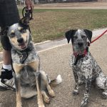 Ranger & Bonita, Peek'n Puppy graduates