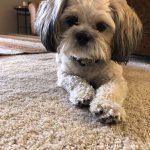 Watson, Peek'n Puppy graduate